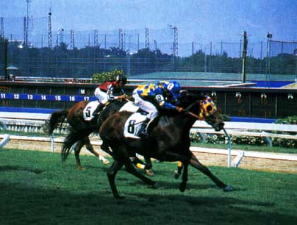 the-royal-turf-club.jpg