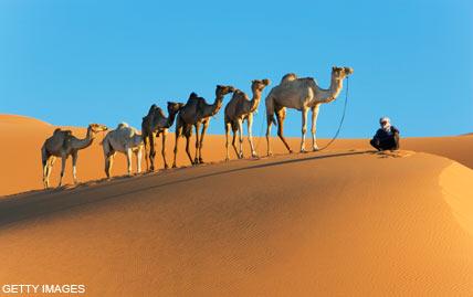 camelsdm_428×269.jpg
